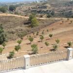 Transición entre jardín y paisaje